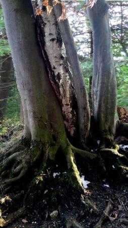 Bäume_1