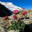 Flora_Berg_4